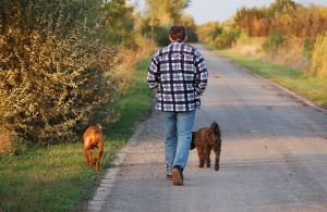 walking-with-dogs-1185411-m.jpg